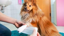 Why Does My Dog Chew His Paws: 6 Reasons and Treatments