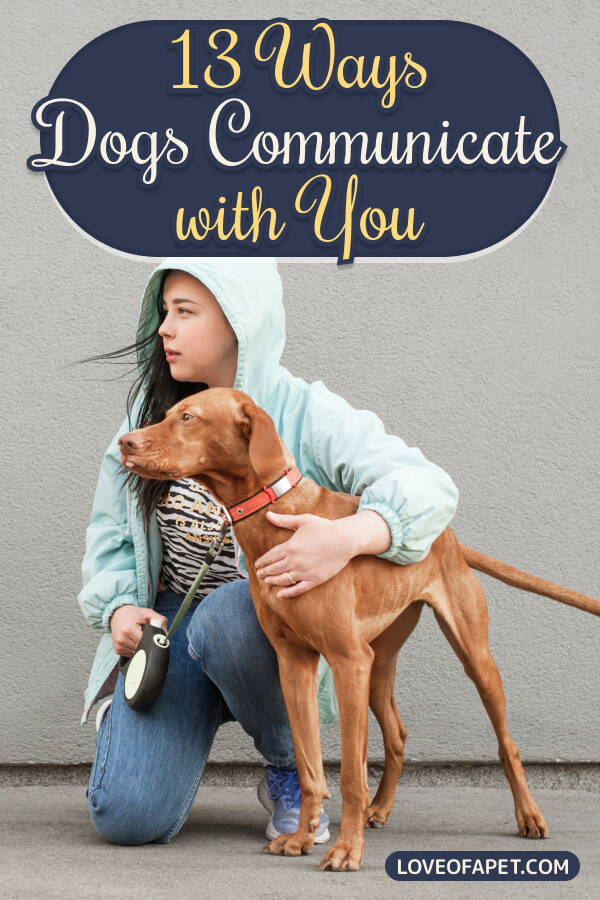 13 Ways Your Dog Is Trying To Communicate With You