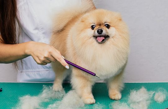 How To Stop Your Dog From Shedding?