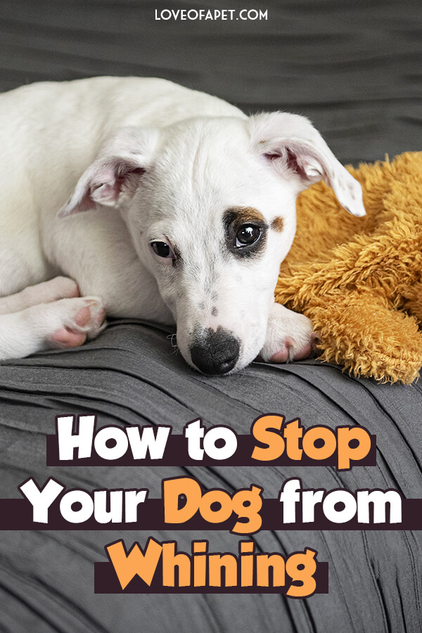 5 Reasons Why Your Dog Whines and How to Stop It
