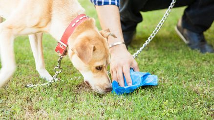 Why Dogs Eat Poop and How to Stop It