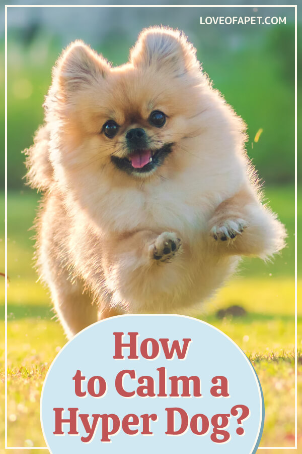 5 Ways to Help Calm a Hyperactive Dog