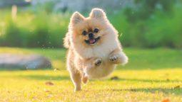 How to Calm a Hyper Dog?