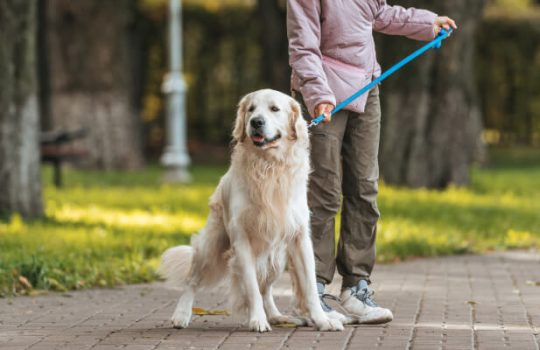 How to Teach Your Dog to Ignore Other Dogs on a Walk