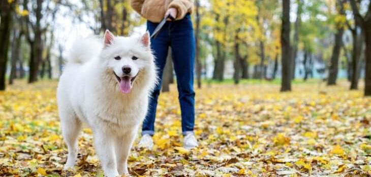 Seven Acts of Canine Kindness