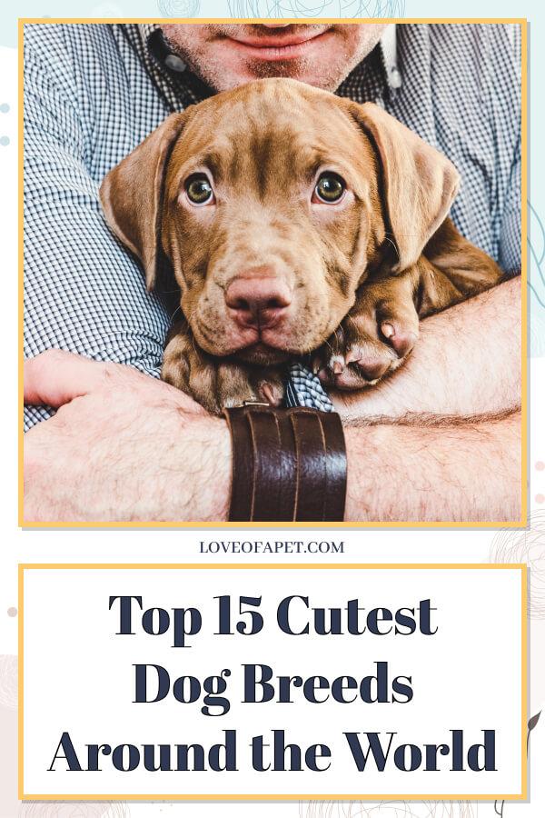 Top 15 Cutest Dog Breeds Around the World