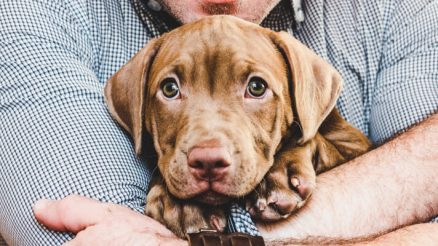 15 Cute Puppies You'll Have to See to Believe