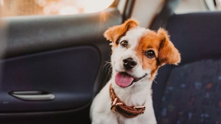 7 Signs That Your Dog Is Truly Happy