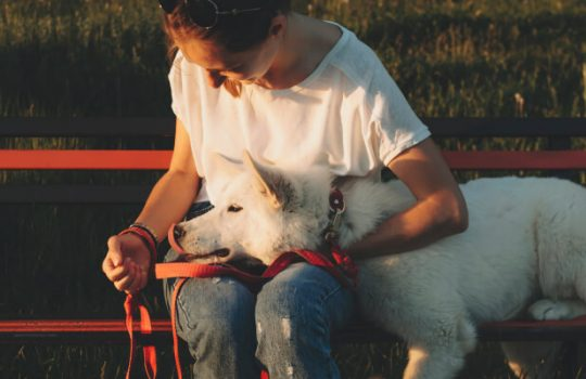 7 Signs Your Dog Trusts You with His Life