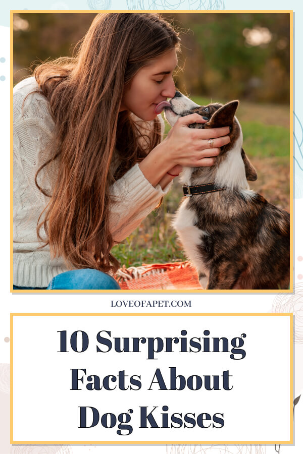10 Surprising Facts About Dog Kisses You Didn't Know About