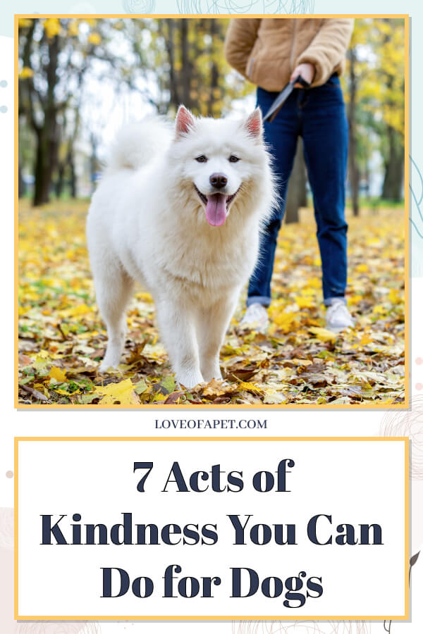 7 Acts of Kindness You Can Do for Dogs