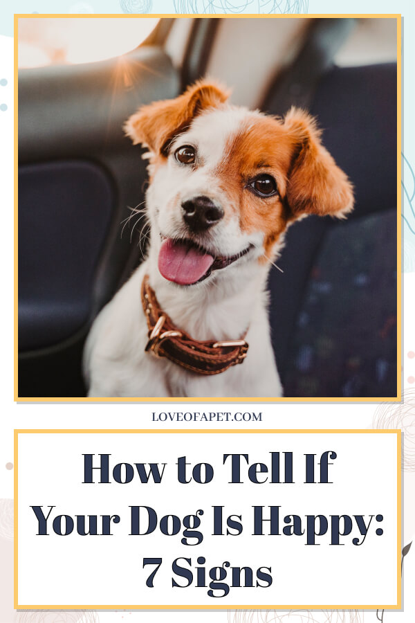 How to Tell If Your Dog Is Happy: 7 Signs